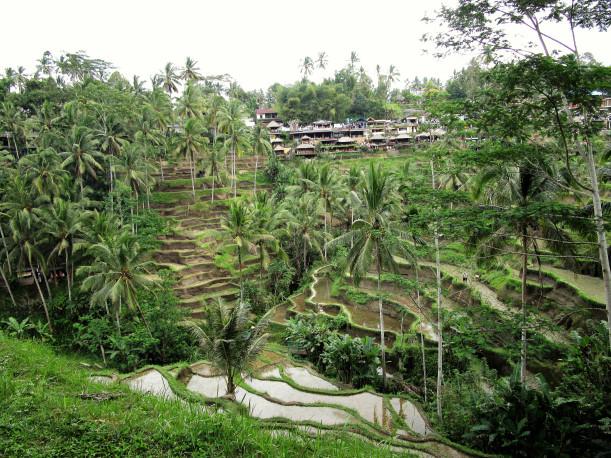 indonesia-2