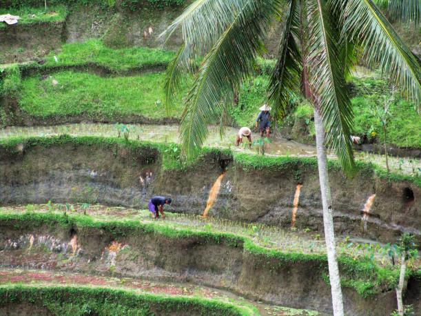 indonesia-foto